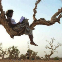 sur-un-arbre
