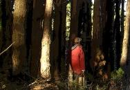Au coeur des arbres