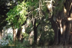 Le bois enchanté
