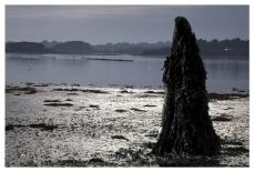 L'homme-varech
