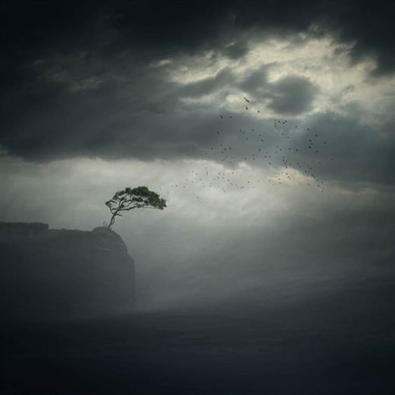 arbre-sur-la-falaise