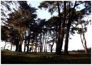 Forêt de Lious