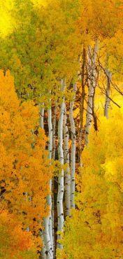 automne1 (2)